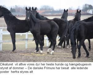 Heste Aflivet